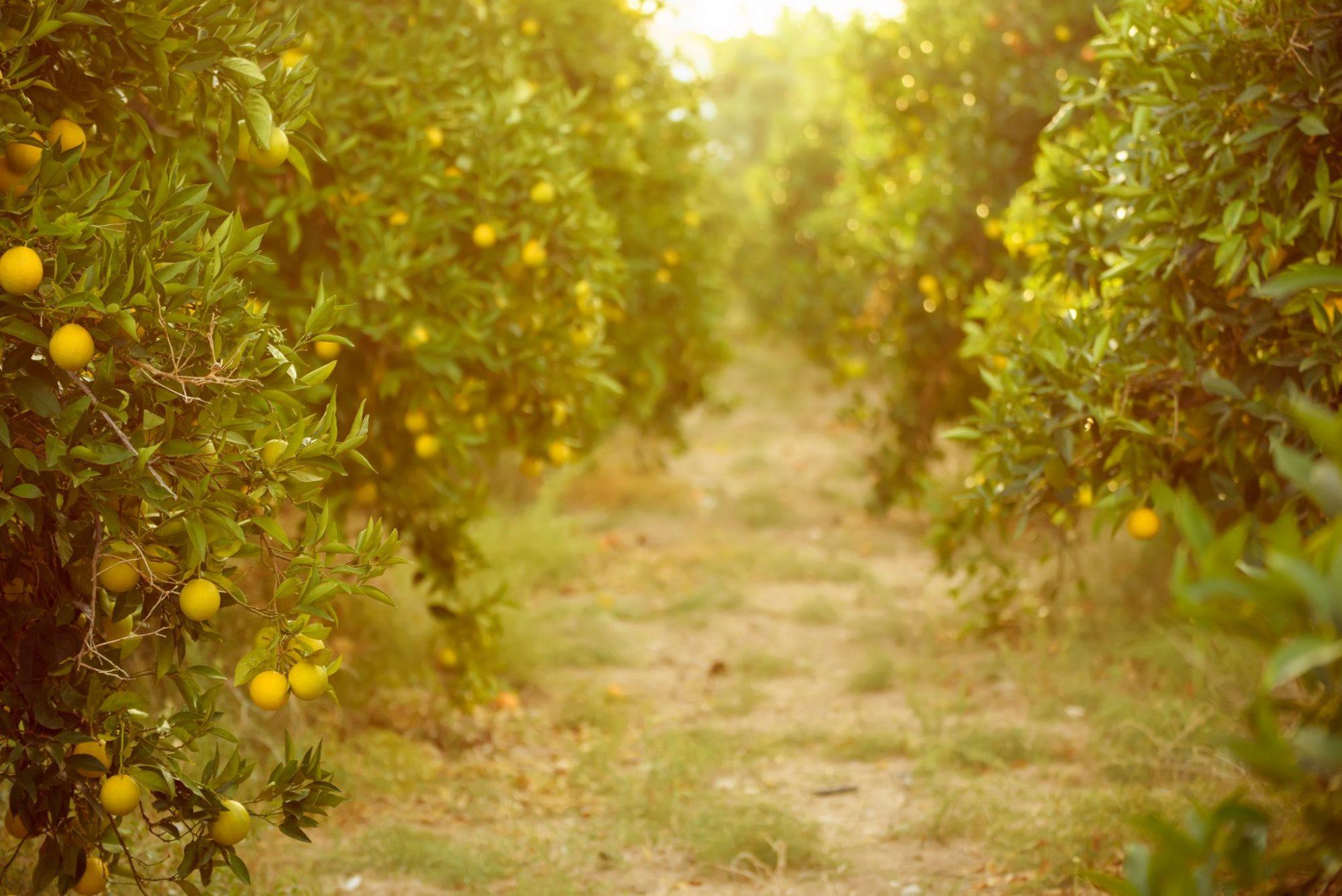Kies vaker biologisch en duurzaam | Kleine veranderingen, grote impact
