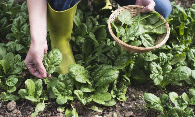 Kies vaker voor biologische producten | Bewust consumeren